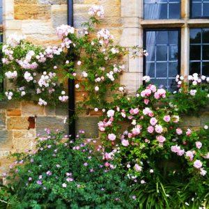 flowers 2 outside wickenden manor